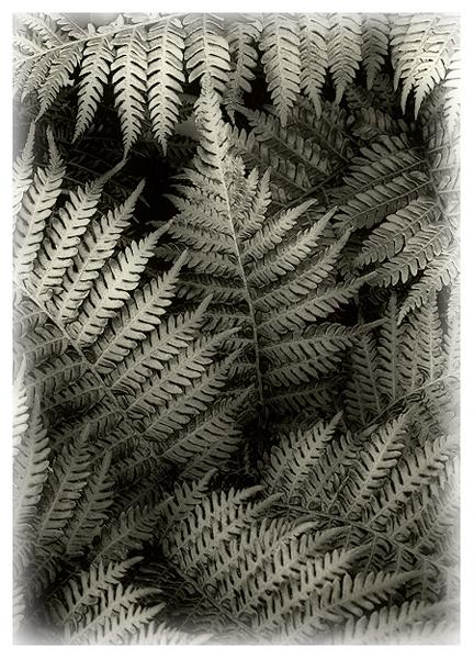 Plenty O Ferns