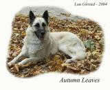 Autumn Leaves - October 25-04