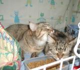 Hertta taking care of Hulda