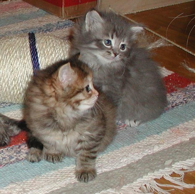 Pikku and Viki
