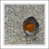 Robin 04 ~ Stourhead