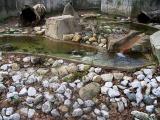 River otters playground.jpg(318)