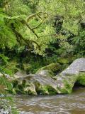 River Mosses