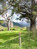 Farmland Trees
