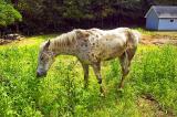 88CU0219 erickson's horse