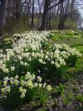 upstate_spring_01
