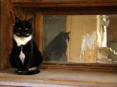 Willy, Bodie, California, 2004