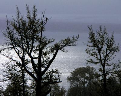 Hawk, Mono Lake, California, 2004