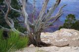 Precipice Garden.jpg