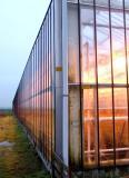 Orange light on greenhouse