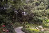 Jungle Garden Plus