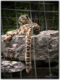 Stephensville Zoo