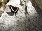 Butterfly, Taboose Creek