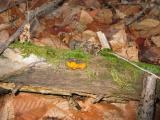 Yellow mold on wood