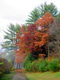 Pennsylvania - Burning Red, Fall Colors