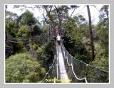 Bukit Bangkirai, East Kalimantan