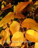 Boyce Desert Fall