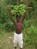 boy carrying banana's