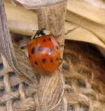 Insects in my garden