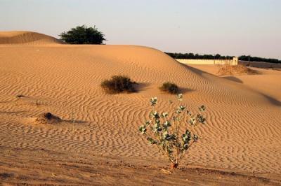 Dunes near the Emir of Sharjahs Palace