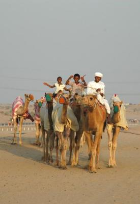 Racing camels, Sharjah