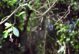 Spider, Erawan National Park