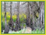 Lake Martin 2005