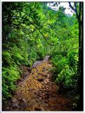Kalalau Trail - MUD!