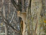 Squirrel_img_0796c.jpg