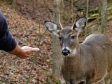 WV Whitetail Deer ~ 4th Qtr 2004