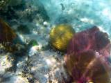 5 meter reef 393a