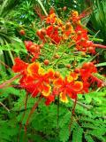 Flower in Jungle