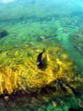 Parrot Fish in Xel-Ha