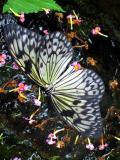 Flight of Butterfly