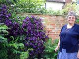 Isabel's clematis in full bloom