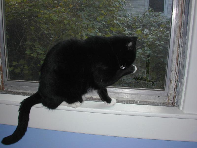 Dashi windowsill