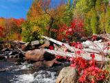 Torrent of Colour