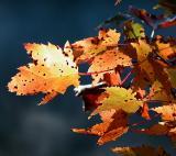 Fall Spots