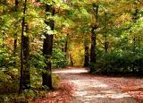 Leafy Meander
