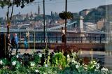 Danube reflection