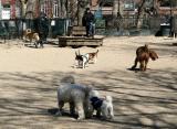 Dog Run WSP