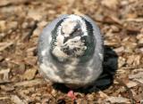 Pigeon Taking in the Sun