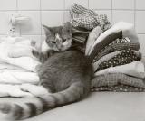 Laundry Assistant