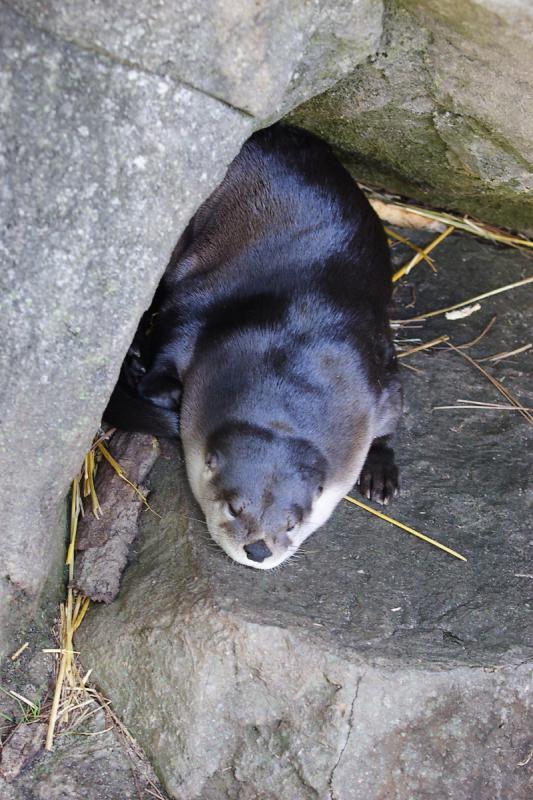 Otter-0001-after.jpg