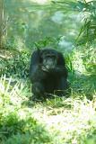 Chimps-0003.jpg