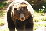 Grizzly-0004.jpg