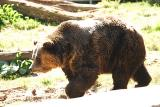Grizzly-0006.jpg