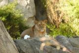 Lioness&Cubs-0001.jpg