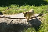 Lioness&Cubs-0019.jpg