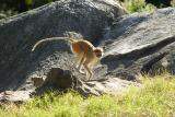 Monkeys-0005-after.jpg